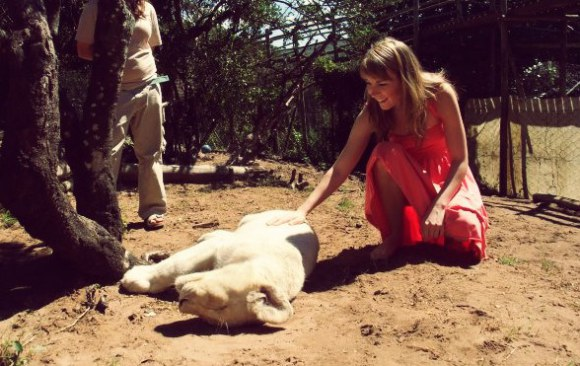 lionsouthafrica1